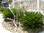 Landscaping with Rock & Sago Palms